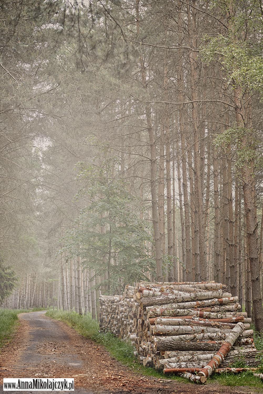 Leśna droga fot. Anna Mikołajczyk